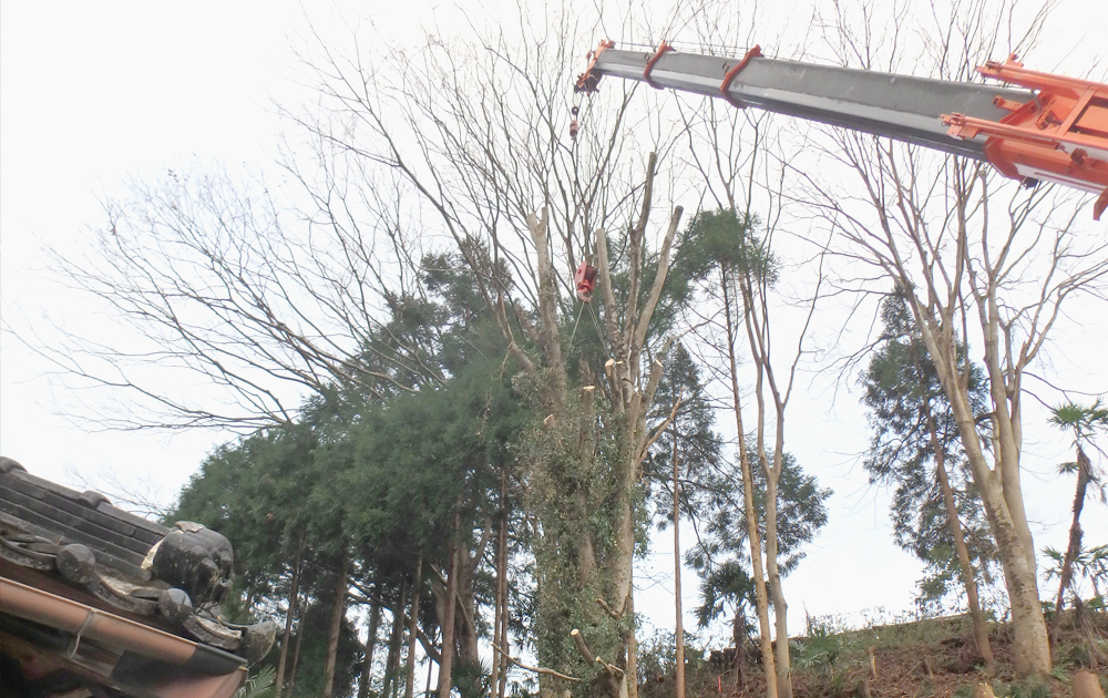 山林特殊伐採